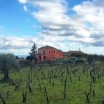 Una #vigna #siciliana sull #Etna guarda il #mare ed attende…